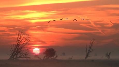 mstbanken bij zonsopkomst
