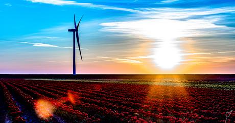 zon,wind of flowerpower