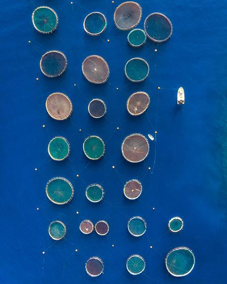 Aquacultuur