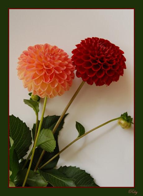 Test met bloemen 1