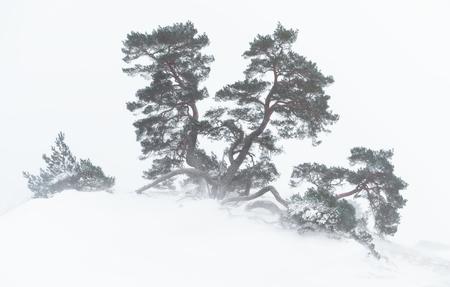 Cold but bliss - - - foto door renevierhuis op 09-02-2021 - deze foto bevat: natuur, sneeuw, winter, landschap, bomen, storm