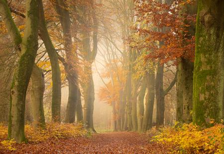 Season of the Falling Leaves - Niet lang meer en de bomen zijn kaal - foto door Berthe2 op 26-11-2019 - deze foto bevat: kleur, herfst, blad, bos, pad, herfstbladeren, herfstkleuren, herfstbos