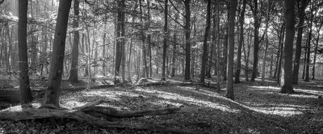 Bos in zwart wit