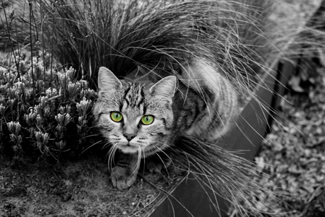 eyes of green....
