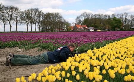 Tulpen - Even wat vrolijks na het gebeuren van gisteren. Zoon Roland fanatiek bezig in de Noordoostpolder, aan het hobbyen tussen de tulpen.  2 mei 2015.  - foto door oudmaijer op 20-12-2016 - deze foto bevat: tulpen, lente, natuur, landschap, tulpenveld, oudmaijer, noortoostpolder