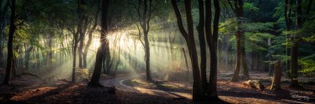 Panorama in het bos