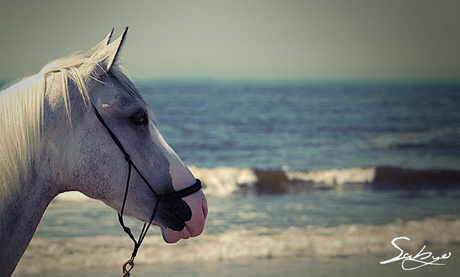 Paard aan het strand