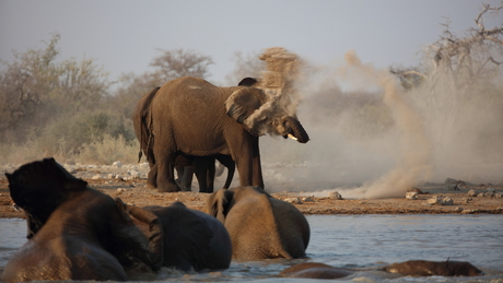 Namibie: Olifantenbad