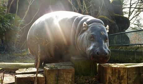 Holy Hippo ;-)