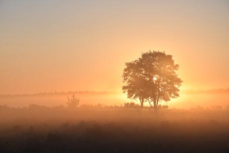 Betoverend ochtendlicht