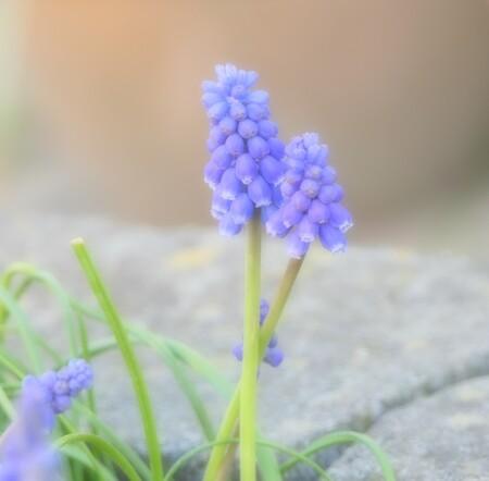 Lente - - - foto door MANL op 02-04-2021 - deze foto bevat: bloem