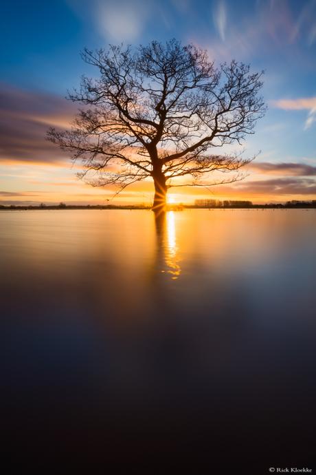 Dutch Lake Wanaka Tree