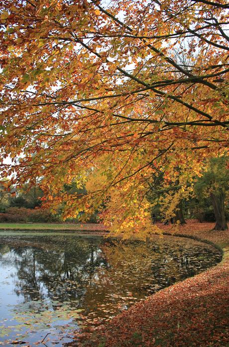 Herfst Landgoed Clingendael