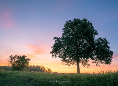 Ochtendlicht - - - foto door Hendrik1986 op 01-06-2020 - deze foto bevat: lucht, zon, water, dijk, panorama, lente, natuur, licht, vakantie, spiegeling, landschap, mist, heide, duinen, bos, tegenlicht, zonsopkomst, bomen, haven, pier, maan, rivier, polder, hdr, lange sluitertijd