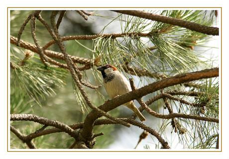 (1) Huismus zit geposeerd op de tak v/e boom