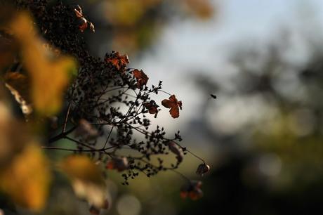 Herfst,