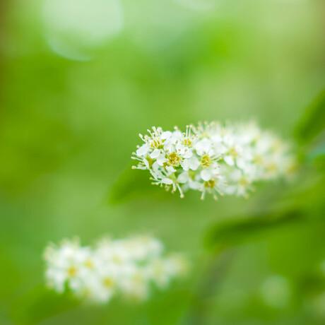 Flowercloud