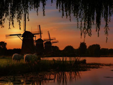 100% Holland