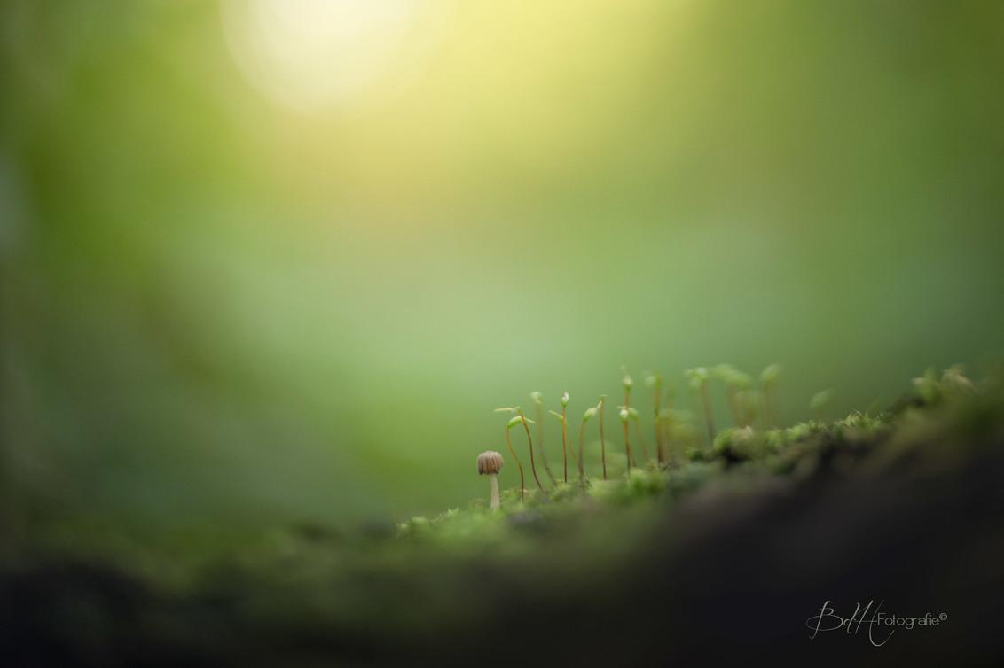 When you're different then your friends - Ik zag ze ineens staan. Een groepje vrienden in het bos.  Ze waren aan het kletsen.  Waar het over ging weet ik niet, want het was te zacht.  Toch - foto door BiancadH op 16-10-2018 - deze foto bevat: groen, macro, natuur, geel, licht, paddestoel, herfst, mos, bos, dof, bokeh