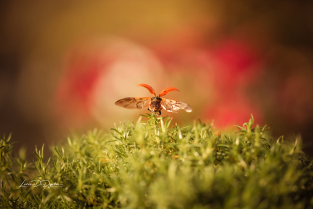 Ladybug - - - foto door luciadedycker op 01-03-2021 - deze foto bevat: groen, rood, macro, zon, bloem, lente, natuur, lieveheersbeestje, bruin, geel, licht, oranje, tuin, insect, bokeh