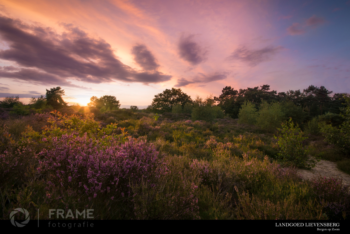 Landgoed Lievensberg - - - foto door framefotografie op 10-08-2017 - deze foto bevat: lucht, natuur, licht, herfst, avond, zonsondergang, vakantie, landschap, heide, bos, tegenlicht, zomer, bomen, lievensberg, Bergen op Zoom, landgoed lievensberg