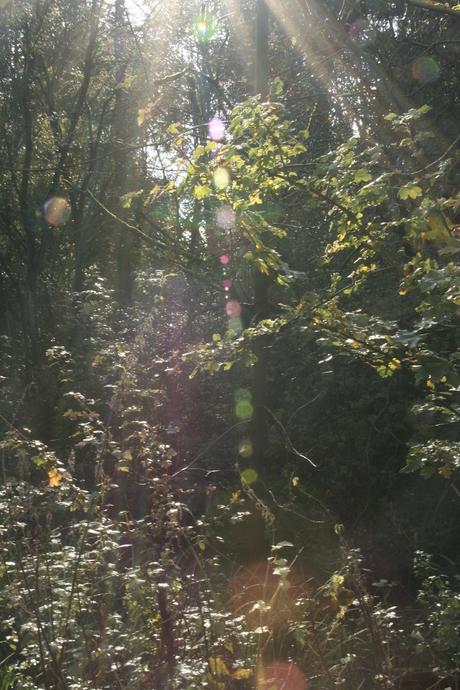 lingenbos zon door bomen