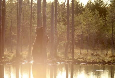 Vroeg in de ochtend Finland