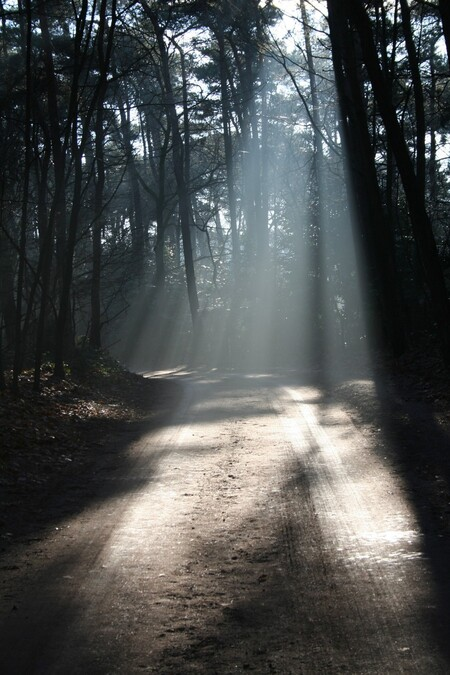 Boswandeling.. - .. toevallig in gezelschap van m'n camera. Dan laat je zo'n momentje niet schieten natuurlijk, maar dan schiet je hem! - foto door Purna op 15-03-2007 - deze foto bevat: licht, bos, straal, lichtstraal