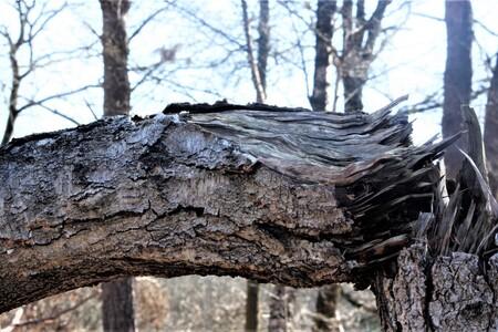 boom doormidden - - - foto door sweetnic86 op 27-02-2021 - deze foto bevat: boom, natuur