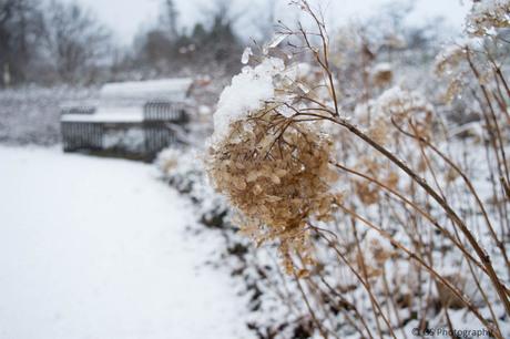 Sneeuwbloempje