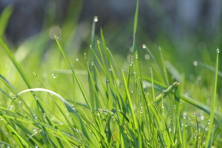 Drups aan gras - - - foto door MANL op 06-04-2021