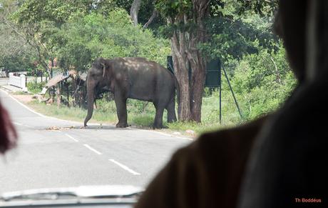 pas op overstekende olifant 1903038356Rm1w