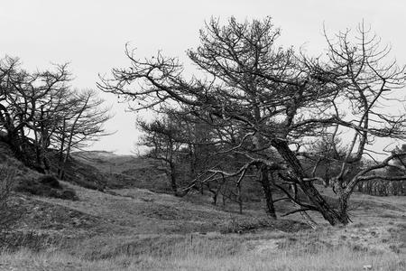 Zwart wit. - met Welmanstudio in de Schoorlse duinen. Opdracht: Zwart wit. - foto door yvonnevandermeer op 28-03-2013 - deze foto bevat: duinen, schoorl, zwart wit, roet route