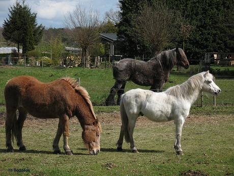 paarden 0804064697mw