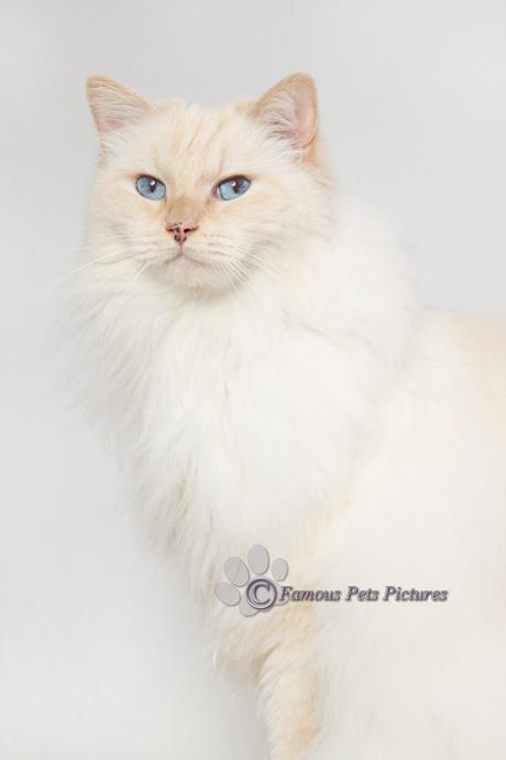 Famous 'furry model'