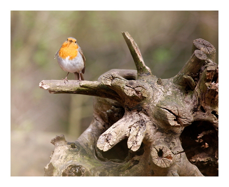 Bird on Treetrunk