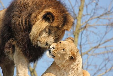 Een romantische moment papa en mama
