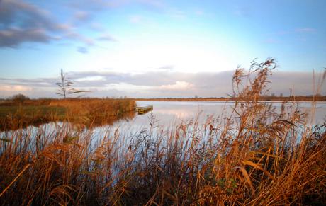 Friesland in de morgen 4.jpg