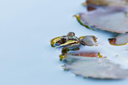 Tuinsafari - kikker - Er valt van alles te beleven in de vijver van de tuin. Vaak is er wel een nieuwsgierige kikker die een kijkje komt nemen - foto door Vriendje70 op 08-09-2020 - deze foto bevat: kikker, tuin, vijver, dieren, reptiel