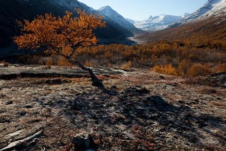 Landschap Jotunheimen
