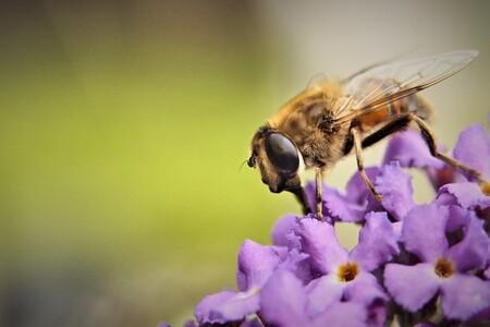 Zweefvlieg - Alvast bedankt voor jullie reacties.   Gr, Johannes - foto door cowiefotografie op 07-12-2020 - deze foto bevat: groen, macro, natuur, bruin, zweefvlieg, geel, oranje, zwart, insect, dof