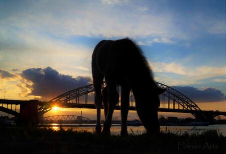 Silhouette van een Koningspaard veulen - Silhouette van een Koningspaard veulentje op het Waalstrand bij Nijmegen. - foto door Flo- op 05-04-2016 - deze foto bevat: lucht, wolken, strand, water, lente, natuur, avond, zonsondergang, landschap, silhouette, tegenlicht, brug, rivier