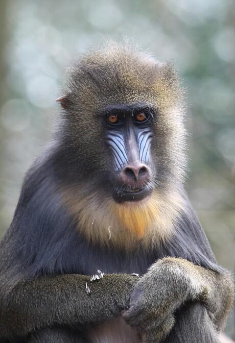 aapjes kijken