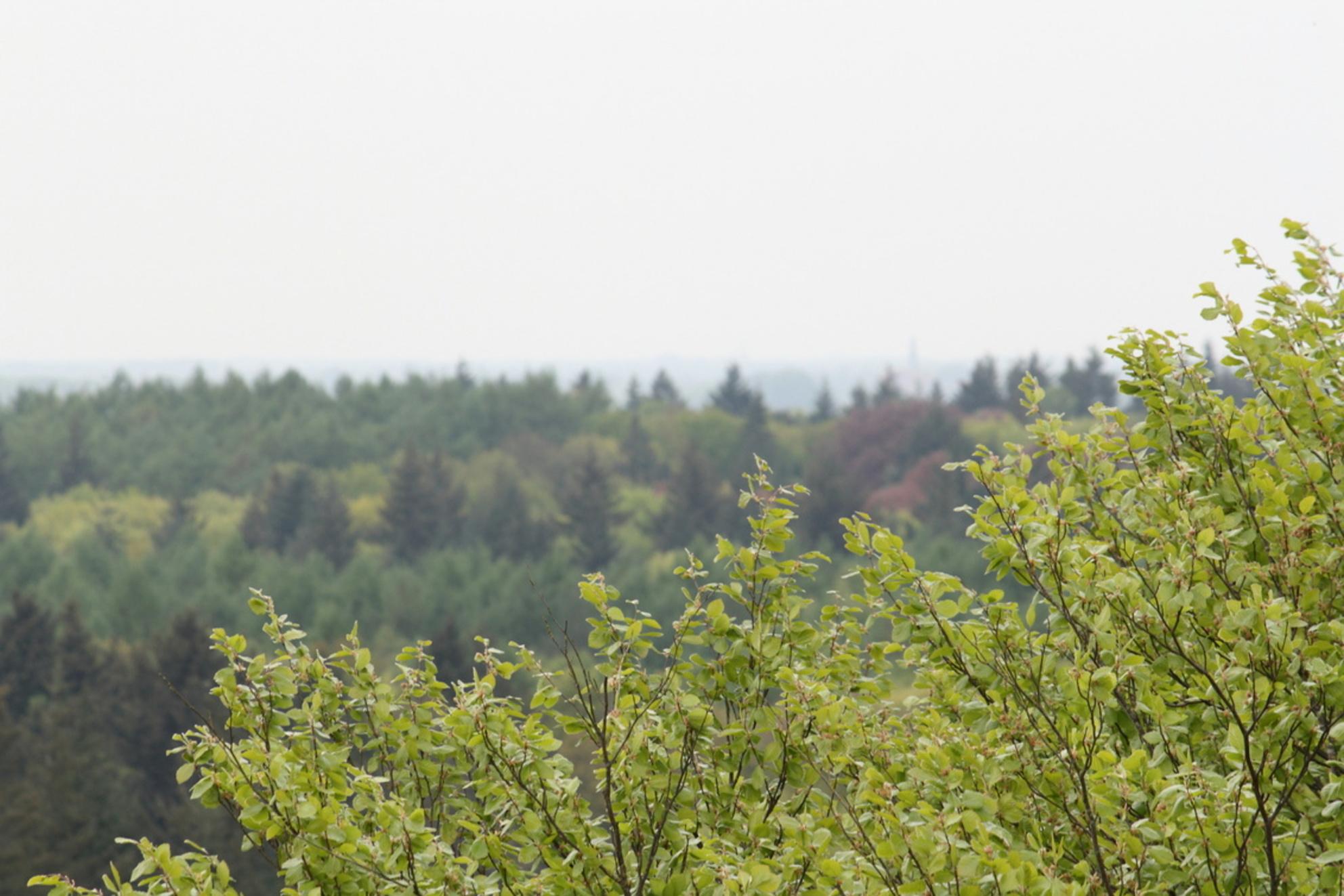 View from the top - Heel hoog, heel ver kunnen kijken vanaf de Lunterse boomtoppen...heerlijk! - foto door MisterJoost op 30-04-2009 - deze foto bevat: boom, bos, lunteren, boomtop