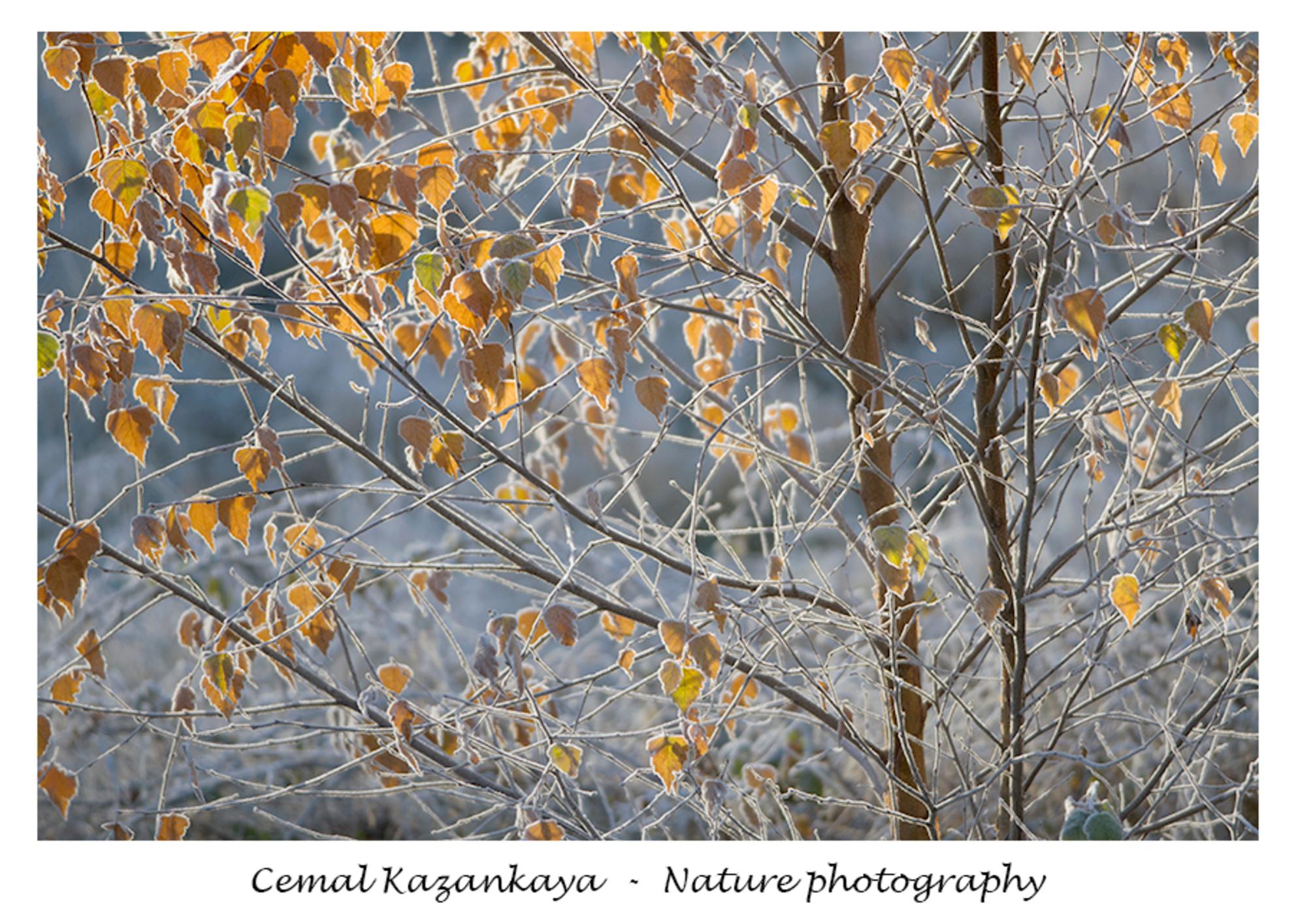 Herfst en Koud - Herfst en Koud.. - foto door CemalKazankaya op 08-12-2020 - deze foto bevat: groen, blauw, boom, bladeren, natuur, bruin, geel, herfst, winter, landschap, bos, bomen, koud, vlindertuin, dof, bokeh, cemal kazankaya - Deze foto mag gebruikt worden in een Zoom.nl publicatie