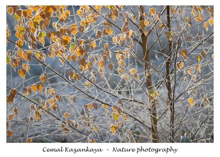 Herfst en Koud - Herfst en Koud.. - foto door CemalKazankaya op 08-12-2020 - deze foto bevat: groen, blauw, boom, bladeren, natuur, bruin, geel, herfst, winter, landschap, bos, bomen, koud, vlindertuin, dof, bokeh, cemal kazankaya