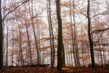 Magische herfst