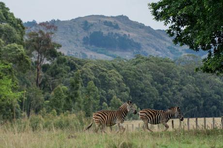 Zuid-Afrika natuur