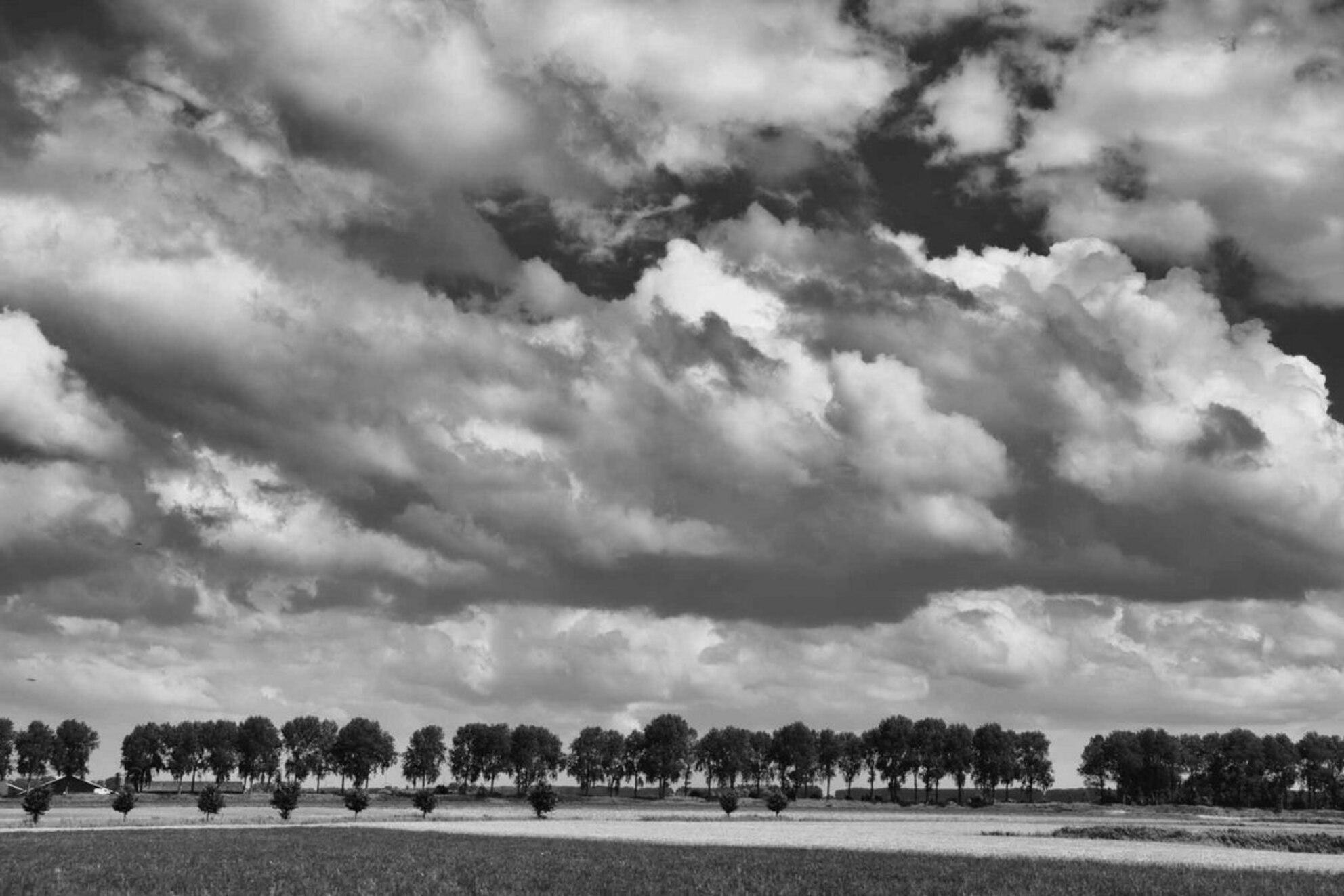 Polderlandschap - Een beeld van het landschap in Zeeuws Vlaanderen bewerkt met Silver Efex pro 2.0 van Nik Software.  Ik ben aan het experimenteren met deze software - foto door lang op 30-07-2013 - deze foto bevat: oisterwijk, zeeland, polder, zeeuws vlaanderen - Deze foto mag gebruikt worden in een Zoom.nl publicatie