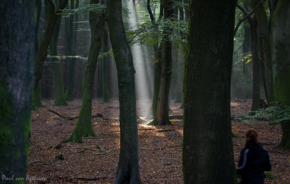 Magic Flashlight - - - foto door Paulv8hoven op 07-10-2014 - deze foto bevat: groen, zon, boom, natuur, geel, licht, herfst, landschap, bos, nederland